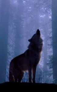 wolf-cropped-with-trees